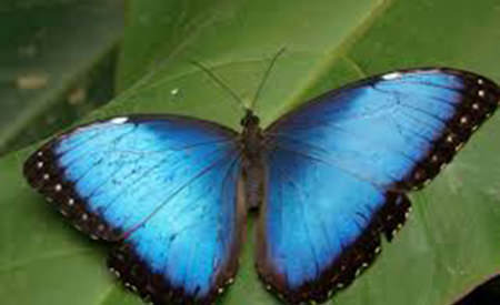viata ca un fluture albastru