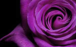 test de gandire laterala petalele din jurul trandafirului