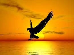 La baza vietii tale se afla libertatea, iar scopul vietii tale este bucuria