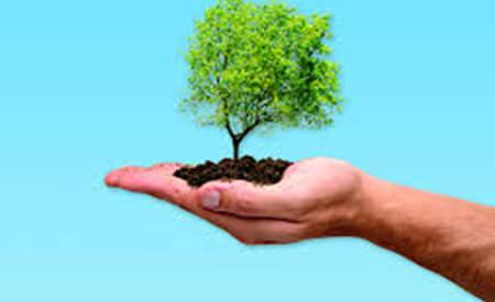 despre fiinta umana sau omul care planta copaci