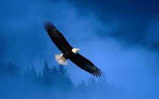 chiar si vulturii au nevoie de un imbold
