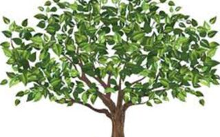 programele genealogice