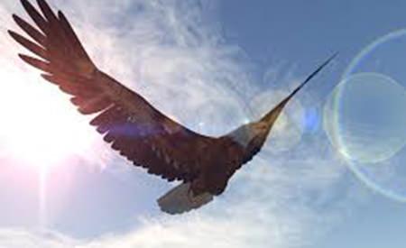adevaratul secret atentia vulturului
