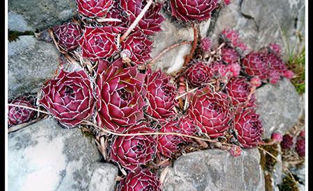 piatra si floarea