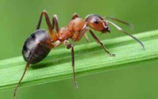 antidot pentru lene lectia furnicii