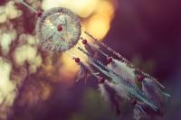 7 lucruri uimitoare despre vise
