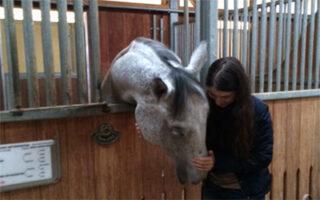 caii cei mai buni terapeuti